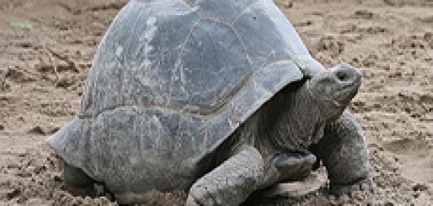 أطول 10 حيوانات عمرا على وجه الأرض