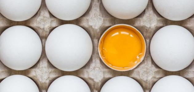 هل تناول البيض يوميا جيد بالنسبة لك أم لا؟........ البيض مغذي!